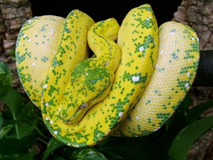 Something something github python