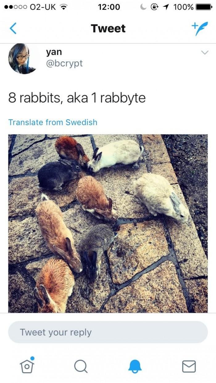 8 rabbits..