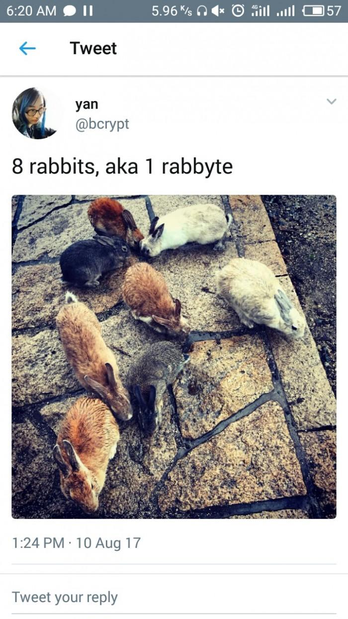 8 rabbits, aka 1 rabbyte