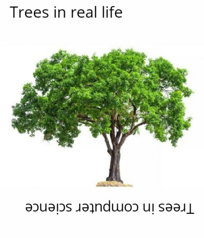 A tree is narrow at the top and wide at the bottom - Our professor.
