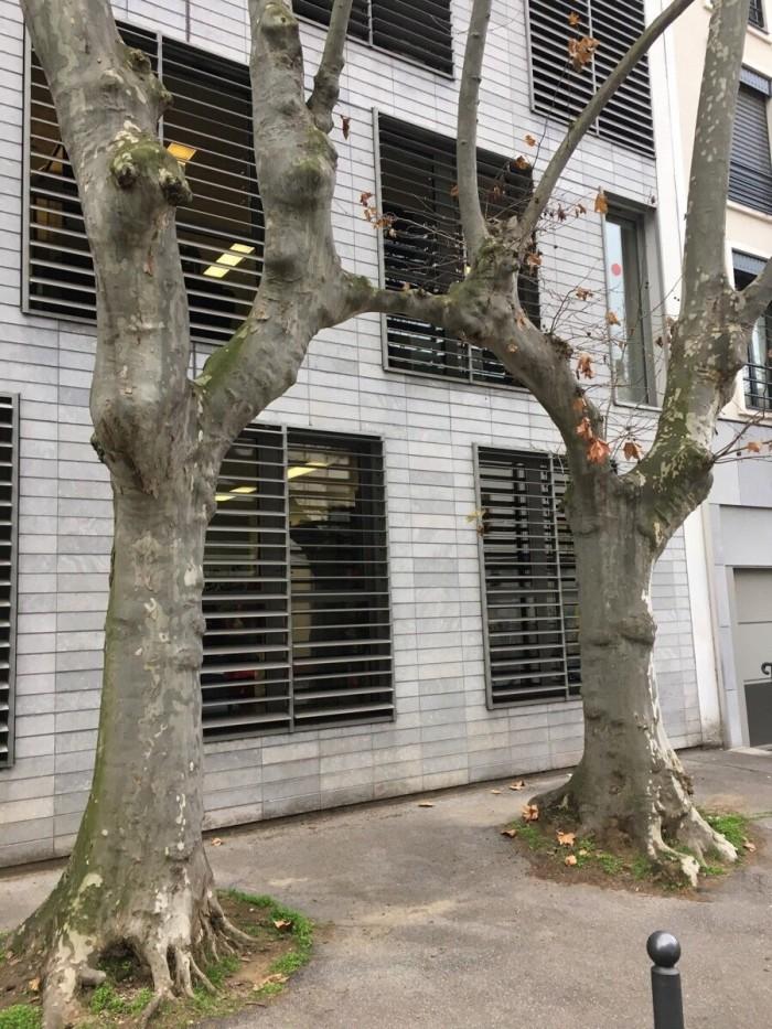 Branch merging IRL