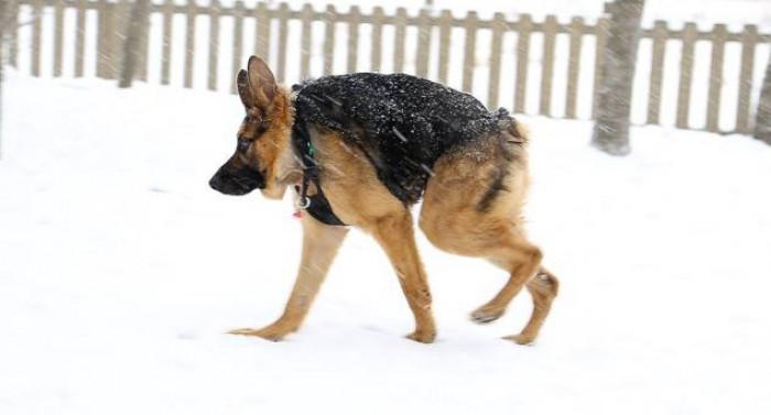 .dog {width: 70%;}