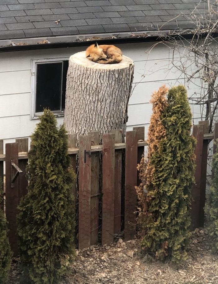 Firefox Crash Log