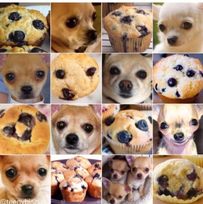 Determining if an image is a Chihuahua or muffin is a tough problem in artificial intelligence
